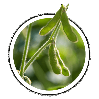 Seed Consultants